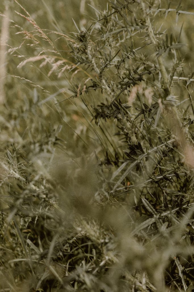 gros plan d'herbres